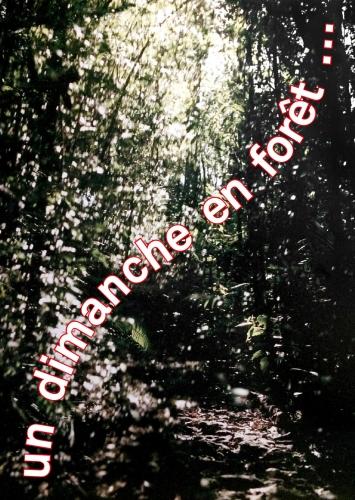 Un dimanche en forêt