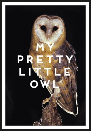MY PRETTY LITTLE OWL